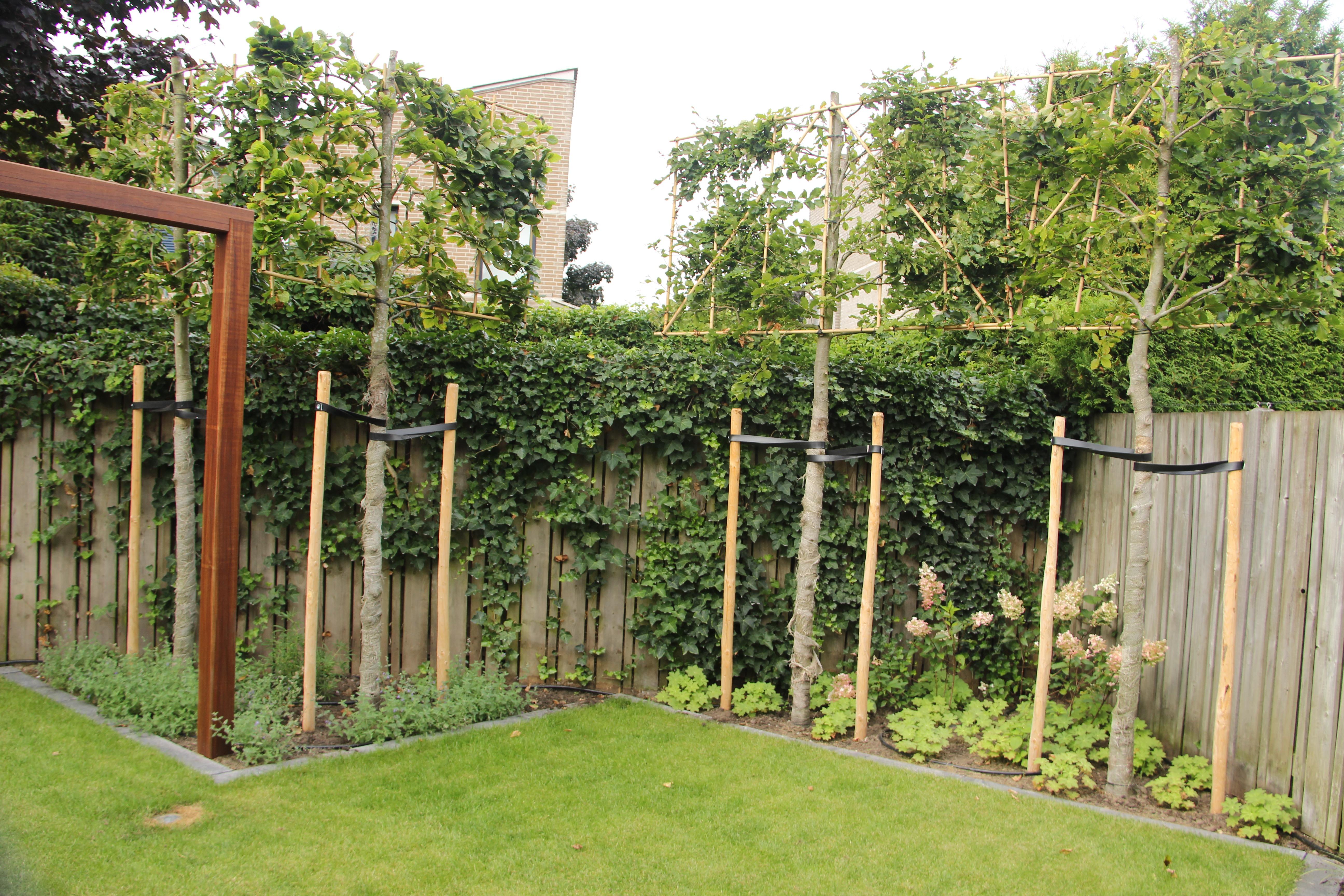 Lelijk uitzicht of inkijk kies leibomen tuinontwerp - Hoe een heuvelachtige tuin te plannen ...